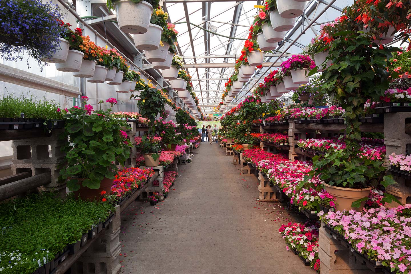 rows of beautiful flats and hanging pots of flowers line the aisles of the antons branch garden center green house